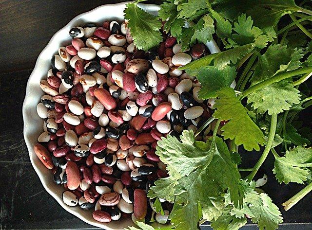koriandr na fazolích