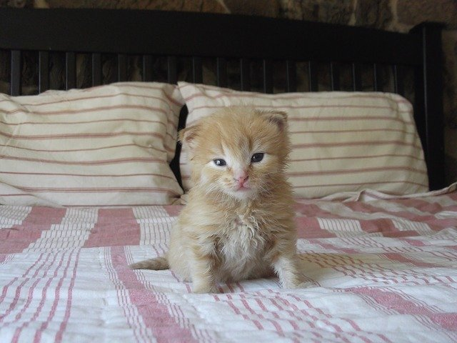 kočička na posteli