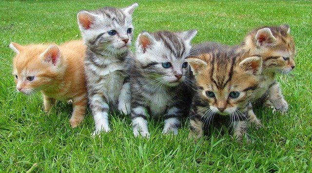 pět koťátek